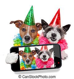 selfie, anniversaire, chiens