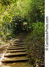 sentier, botanique, kirstenbosch, national, garden., piste, marche, forêt