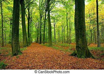 sentier, luxuriant, forêt, par