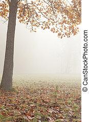serein, arbre, -, automne, brouillard, paysage