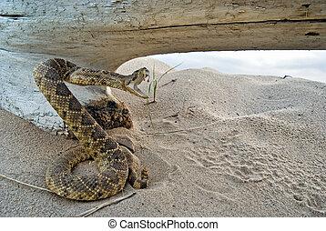 serpent, sournois