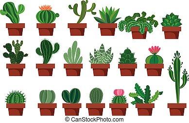 set., cactus