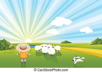 sheeps, chien