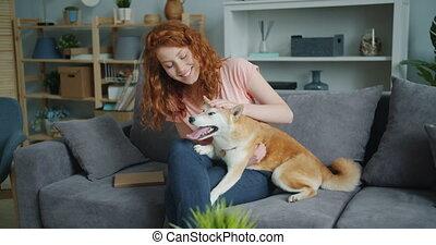 shiba, mignon, séance femme, inu, caresser, chien, divan, appartement, séduisant
