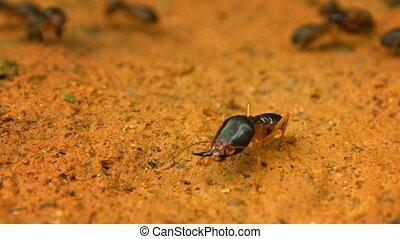 sien, famille, soldat, -, termite, garder