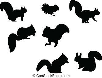 silhouette, écureuil