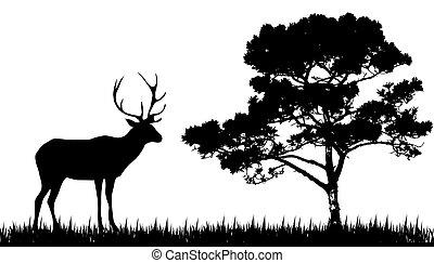 silhouette, arbre, cerf