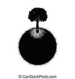 silhouette, arbre chêne