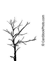 silhouette, arbre, mort, isolé
