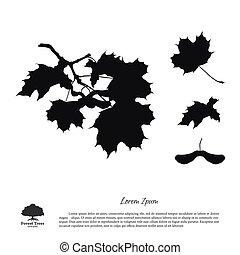 silhouette, arrière-plan noir, branches, blanc, érable
