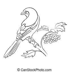 silhouette, asseoir, -, vecteur, rowan, branche, oiseau