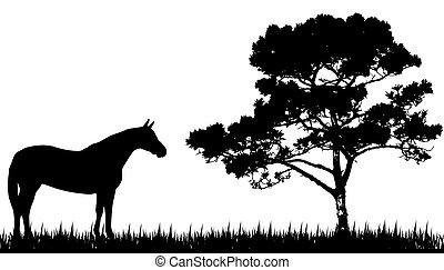 silhouette, cheval, arbre