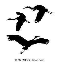 silhouette, grues, voler, vecteur, fond, blanc