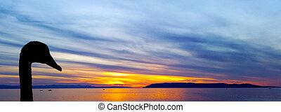 silhouette, makarska, sur, cygne, adriatique, croatie, mer, coucher soleil