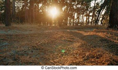 silhouette, nature, athlétique, jeune, pin, sain, courant, sunlight., homme, dehors, style de vie, sport, forêt