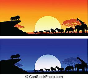 silhouette, safari