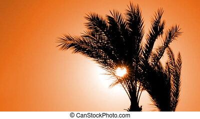 silhouette, soleil, arbre, contre, monture, paume