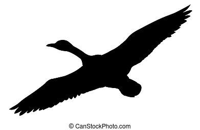 silhouette, voler, canards, vecteur, fond, blanc