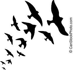 silhouette, voler, oiseaux, vecteur, conception, fond, blanc, troupeau