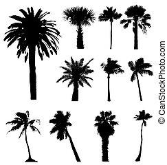 silhouettes., éditer, collection, vecteur, palmiers, facile, size., n'importe quel