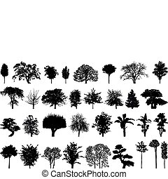 silhouettes, arbres