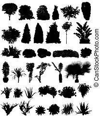 silhouettes, arbrisseaux, arbres