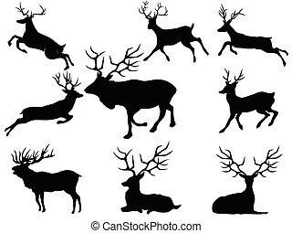 silhouettes, cerf