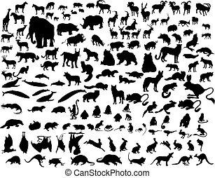 silhouettes, ensemble animal