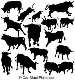 silhouettes, ensemble, taureau