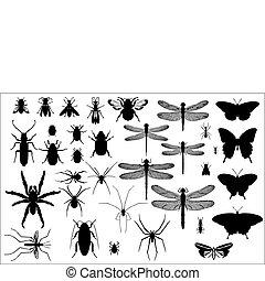 silhouettes, insectes, araignées