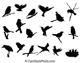 silhouettes, oiseau, collection