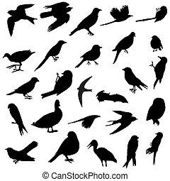 silhouettes, oiseaux