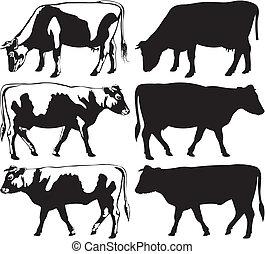 silhouettes, taureau, vache