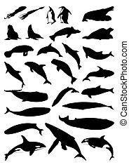 silhouettes, vecteur, mammals., mer, illustration