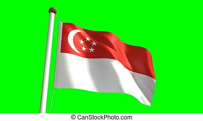 singapour, écran, &, drapeau, vert, (loop