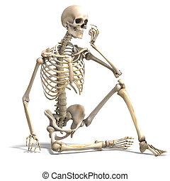 skeleton., correct, coupure, sur, anatomique, rendre, sentier, blanc mâle, ombre, 3d