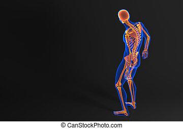 skeleton., coupure, contient, humain, sentier, vue., arrière