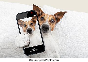 sleepyhead, selfie, chien