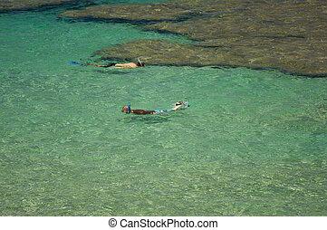 snorkelers, baie