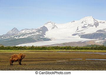 snowcapped, grisonnant, mountais, paysage, ours