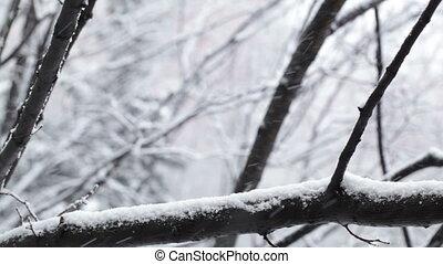 snowfall.