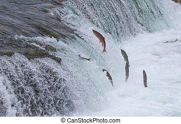 sockeye, sauter, saumon, haut, chutes