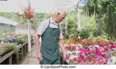 soigner, fleurs, cultiver, serre, personne âgée homme
