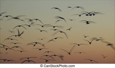 soir, voler, ciel, nombre, mouettes, grand, 2, contre