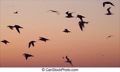 soir, voler, ciel, nombre, mouettes, grand, 5, contre