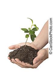 sol, plante, faible, mains