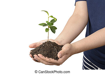 sol, plante, jeune, mains