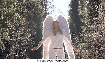 soleil, ange blanc