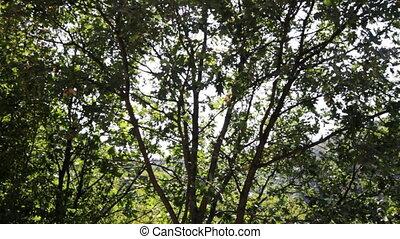 soleil, appareil photo, arbre, haut