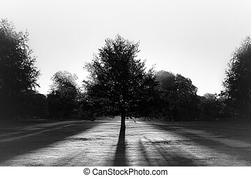 soleil, bw, parc, contre, arbre